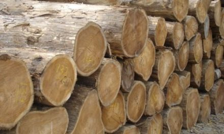 Non-Availability of Timber in Ganderbal depots