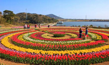 Free wifi, other facilities at Jammu and Kashmir Tulip Garden this year