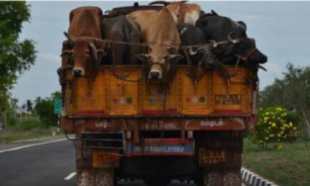 Truck Carrying Bovine To Kashmir Set Ablaze In Ramban
