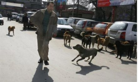 Stray dogs continue to make life of Srinagarties miserable, 'SMC fails to act'
