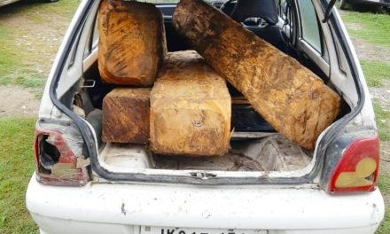 Maruti Car with Illicit timber seized in Ganderbal