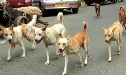 Stray dogs strike in Baramulla, 21 persons injured, hospitalized