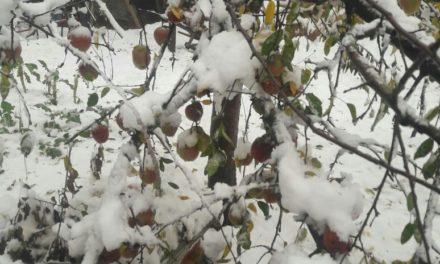 Snowfall of Nov 3/4 declared Special Natural Calamity