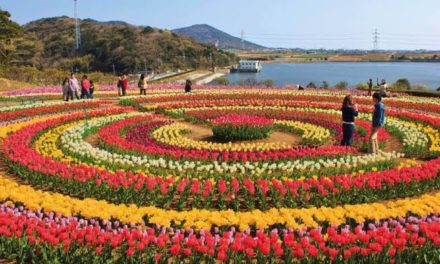 12 lakh Tulip bulbs planted in Asia's largest Tulip garden this year