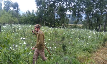 Anantnag police continues drive against contraband cultivation