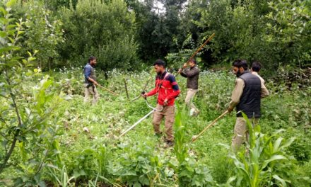 Police launches extensive drive against poppy cultivation in Anantnag
