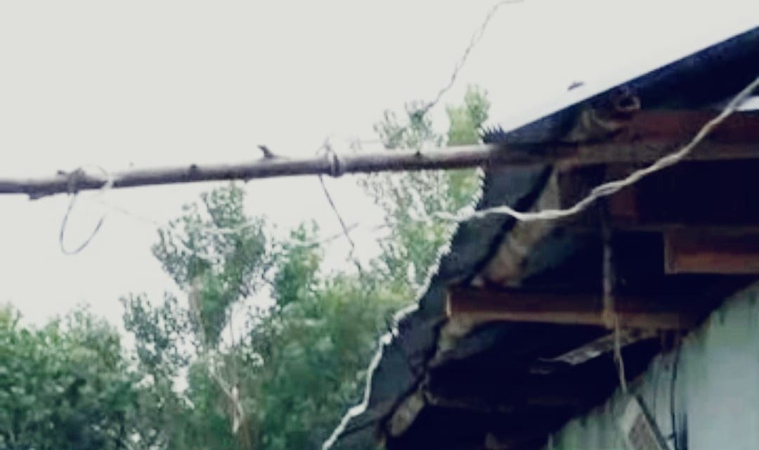 Hanging electricity wires on tree branches poses serious threat to residents  in Kachan Ganderbal