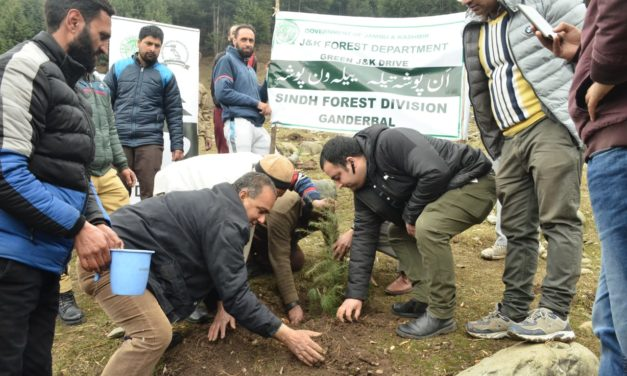 Forest department starts plantation drive in Ganderbal